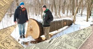 """На Миколаївщині лісництво під виглядом """"санітарної чистки"""" знищує історичний ліс"""