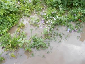 potop-13-07-2017-046