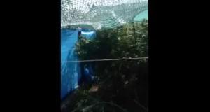 Поліцейські Вознесенського району вилучили наркозілля у місцевого мешканця (ФОТО, ВІДЕО)