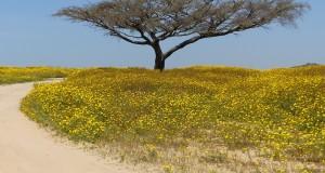 rasteniya-pustyni-19