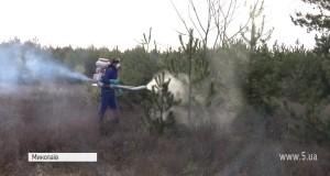 ВІДЕО! Миколаївські ялинки обробили хімічним розчином