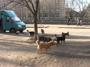 147 вознесенців підписали КОЛЕКТИВНЕ ЗВЕРНЕННЯ щодо критичної ситуації з безпритульними собаками у Вознесенську