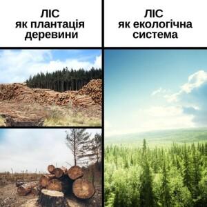 Ліс як екол.система